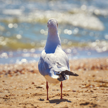 Seagull on the shore close - up on the background of natural sea water.