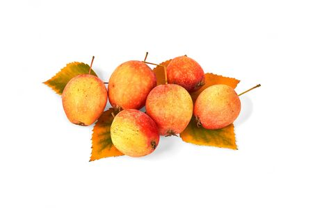 Ripe wild apples with yellow autumn leaves isolated on white background.