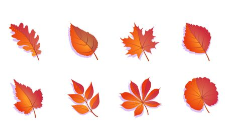 Autumn leaves set colorful. Isolated on white background. Simple cartoon flat leaves - oak, maple, grape, rowan, birch. Vector illustration. Stock Illustratie