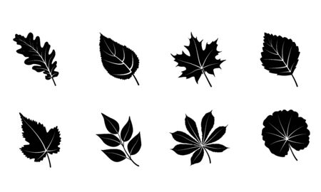 Glyph autumn leaves set. Isolated on white background. Black silhouettes leaves - oak, maple, grape, rowan, birch. Vector illustration.