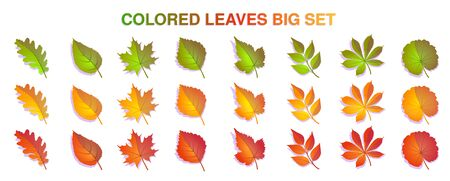 Autumn leaves big set colorful. Yellow, red. green leaves Isolated on white background. Vector illustration. Stock Illustratie