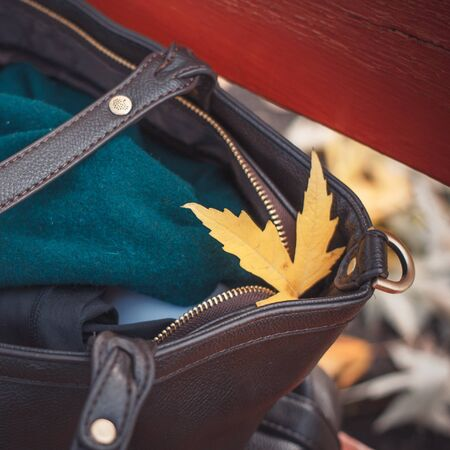 Yellow maple leaf on the bag in park. Retro colors. The arrival of autumn.