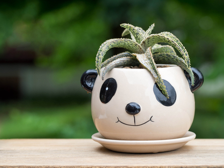landscape: The cactus is in a panda pot. Put on a wooden table Green backdrop of trees.