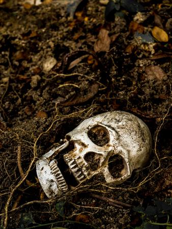 Di fronte al cranio umano sepolto nel suolo con le radici dell'albero sul lato. Il cranio ha una sporcizia attaccata al cranio. Concetto di morte e di Halloween Archivio Fotografico - 88910201
