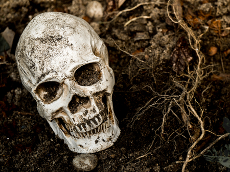 In front of human skull buried in the soil with the roots of the tree on the side. The skull has dirt attached to the skull.concept of death and Halloween Stock Photo
