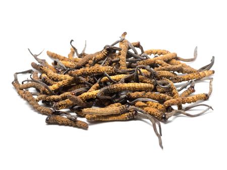 fermer Ophiocordyceps sinensis (CAO CHONG, DONG CHONG XIA CAO) ou cordyceps aux champignons c'est une herbe. Les propriétés médicinales dans le traitement des maladies.