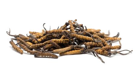 fermer Ophiocordyceps sinensis (CAO CHONG, DONG CHONG XIA CAO) ou cordyceps aux champignons c'est une herbe. Les propriétés médicinales dans le traitement des maladies. Banque d'images