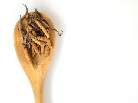 Group of Ophiocordyceps sinensis or mushroom cordyceps this is a herbs placed on wooden spoon on white isolated background. on wooden table. National organic medicine.