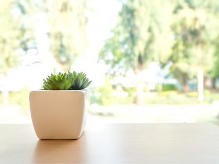 The green plastic cactus is in a white pot. Put on a wooden table The front of the window