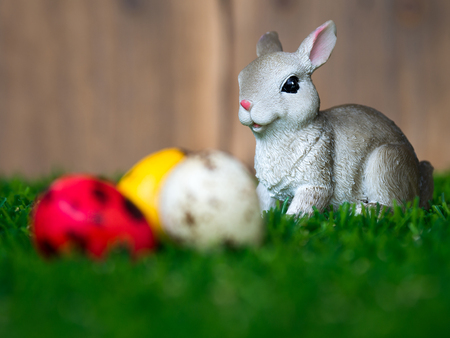 select focus of rabbit placed on green grass. in front of rabbit have a colorful easter eggs. The back is a brown wood frame. The concept of easter