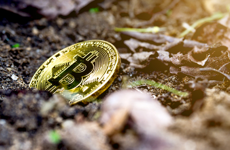 Golden bitcoin in the ground. The concept of investment and fluctuation of bitcoin and crypto currency.