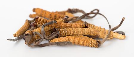 groupe d'Ophiocordyceps sinensis ou cordyceps aux champignons c'est une herbe sur fond isolé. Propriétés médicinales dans le traitement des maladies. Médecine biologique nationale.