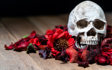 In front of human skull placed on red dried flowers on the wooden background.concept of death and Halloween Standard-Bild - 110368227