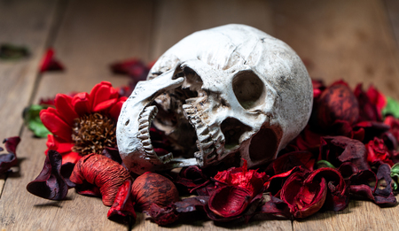 In front of human skull placed on red dried flowers on the wooden background.concept of death and Halloween Standard-Bild - 110368229