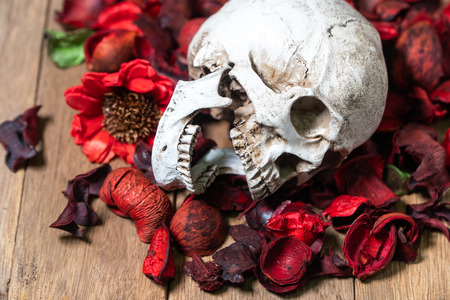 In front of human skull placed on red dried flowers on the wooden background.concept of death and Halloween Standard-Bild - 110368230