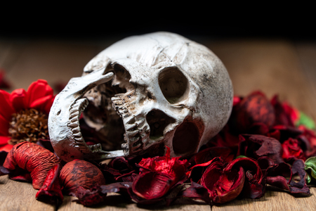 In front of human skull placed on red dried flowers on the wooden background.concept of death and Halloween Standard-Bild - 110368231
