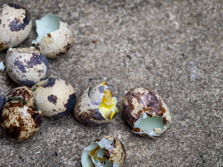 close up of quail eggs shell on the cement floor Standard-Bild - 110368241