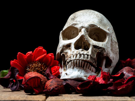 In front of human skull placed on red dried flowers on the wooden background.concept of death and Halloween Standard-Bild - 110368307