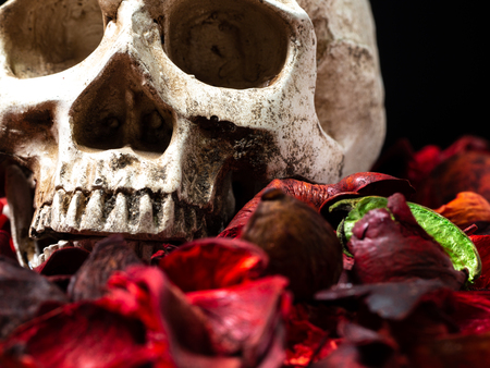 In front of human skull placed on red dried flowers on the wooden background.concept of death and Halloween Standard-Bild - 110368308