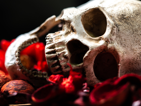 In front of human skull placed on red dried flowers on the wooden background.concept of death and Halloween Standard-Bild - 110368310