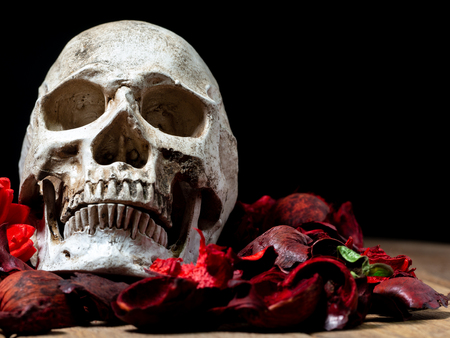 In front of human skull placed on red dried flowers on the wooden background.concept of death and Halloween Standard-Bild - 110368313