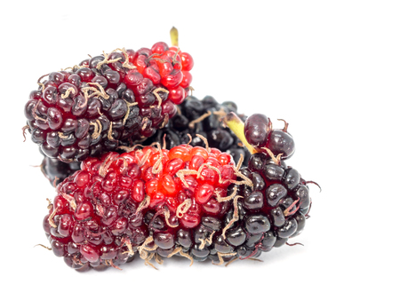 Group of mulberries isolated on white background. Mulberry this a fruit and can be eaten. Mulberry is delicious and sweet nature. Standard-Bild - 110721286