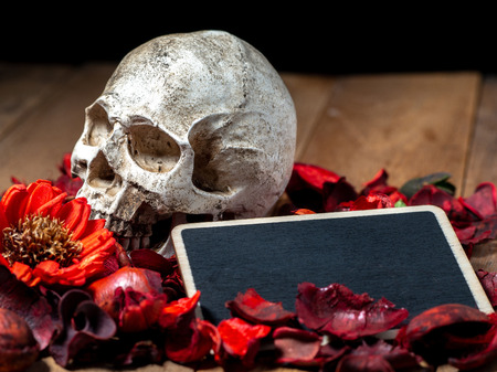 In front of human skull placed on red dried flowers on the wooden background with blank blackboard for text and content of death and Halloween Standard-Bild - 110721301