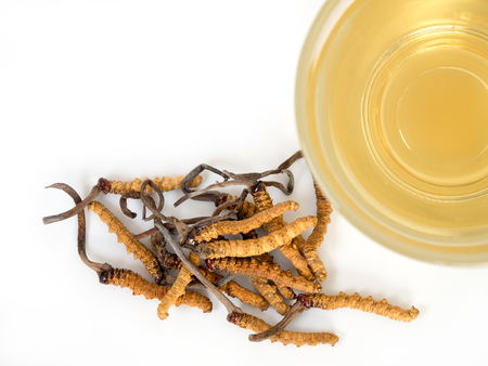 Select focus of mushroom cordyceps (CHONG CAO) this a herbs. With a glass of water, add water from the Ophiocordyceps sinensis extract. Medicinal properties in the treatment of diseases. Banque d'images