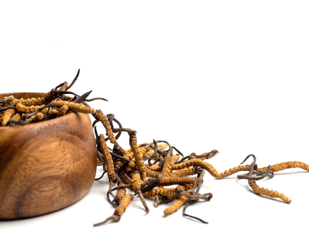 Close up Cordycep sinensis (CHONG CAO) or mushroom cordyceps on Wooden bowl on isolated background. Medicinal properties in the treatment of diseases. National organic medicine.