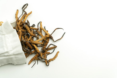 Closeup of Ophiocordyceps sinensis or mushroom cordyceps in white cloth bag on isolated background. Medicinal properties in the treatment of diseases. National organic medicine.