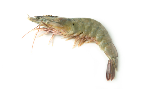 close up fresh raw pacific white shrimp on white background.