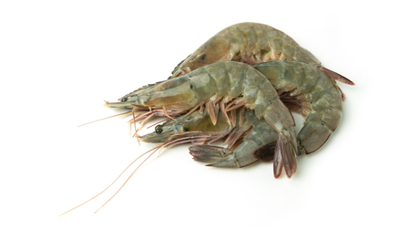 close up group of fresh raw pacific white shrimp on white background. Stock Photo