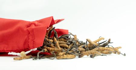 Gros plan d'Ophiocordyceps sinensis ou cordyceps aux champignons dans un sac en tissu rouge sur fond isolé. Propriétés médicinales dans le traitement des maladies. Médecine biologique nationale. Banque d'images