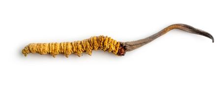 cordycepe sinensis (CHONG CAO, DONG CHONG XIA CAO) ou cordyceps aux champignons c'est une herbe sur fond isolé. Propriétés médicinales dans le traitement des maladies. Médecine biologique nationale. Banque d'images