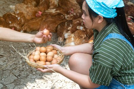 Happy asian farmers wear plaid long sleeve shirt brown apron are holding fresh chicken eggs into basket at a chicken farm in him home area