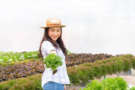 Asian farmer woman holding raw vegetable salad for check quality in hydroponic farm system in greenhouse. Concept of Organic foods