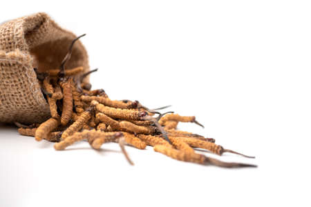 Closeup of Ophiocordyceps sinensis or mushroom cordyceps in Brown sack bag on isolated background. Medicinal properties in the treatment of diseases. National organic medicine.