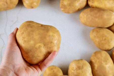 Yellow potato heart shaped in woman hand. Close up.