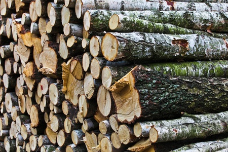 deported: birch cut in pieces waiting to be deported Stock Photo