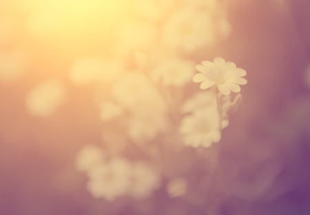 bleached: Vintage flower Stock Photo