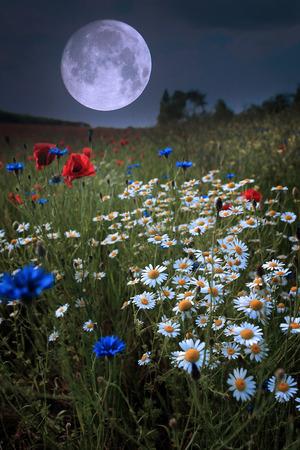 Moonrise over wild flower field photo