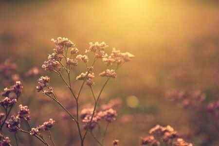 Wildflower: Wildflower in sunset