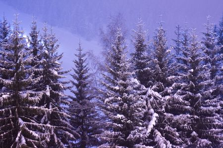 closely cropped: A closely cropped long exposure of snow covered trees at night in the Alps Stock Photo