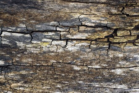 wood panelling: Old weathered wood