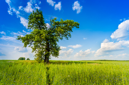 Big tree blue sky with cloud and meadow photo
