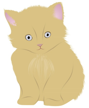 Cat (kitten) Vector