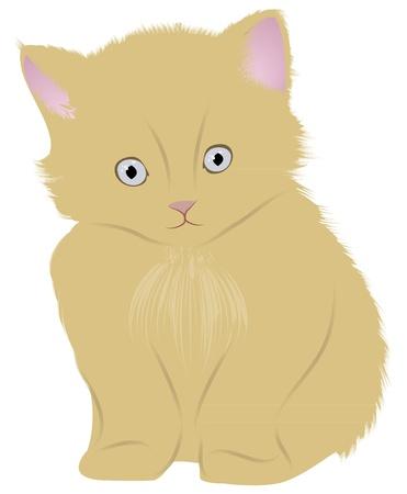 Cat (kitten) Vector