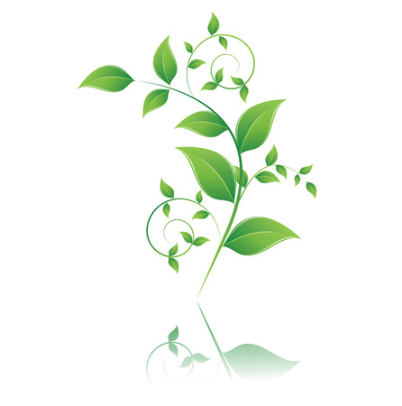 isolated green leaf on white background Illustration