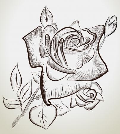 flores retro: Ilustraci�n del vector de rosas dibujadas a mano Vectores