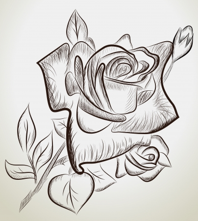 Vector illustration of hand drawn roses